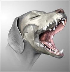 dientes sonrisa perfecta ortodoncia mascotas perros gatos dentista madrid niños